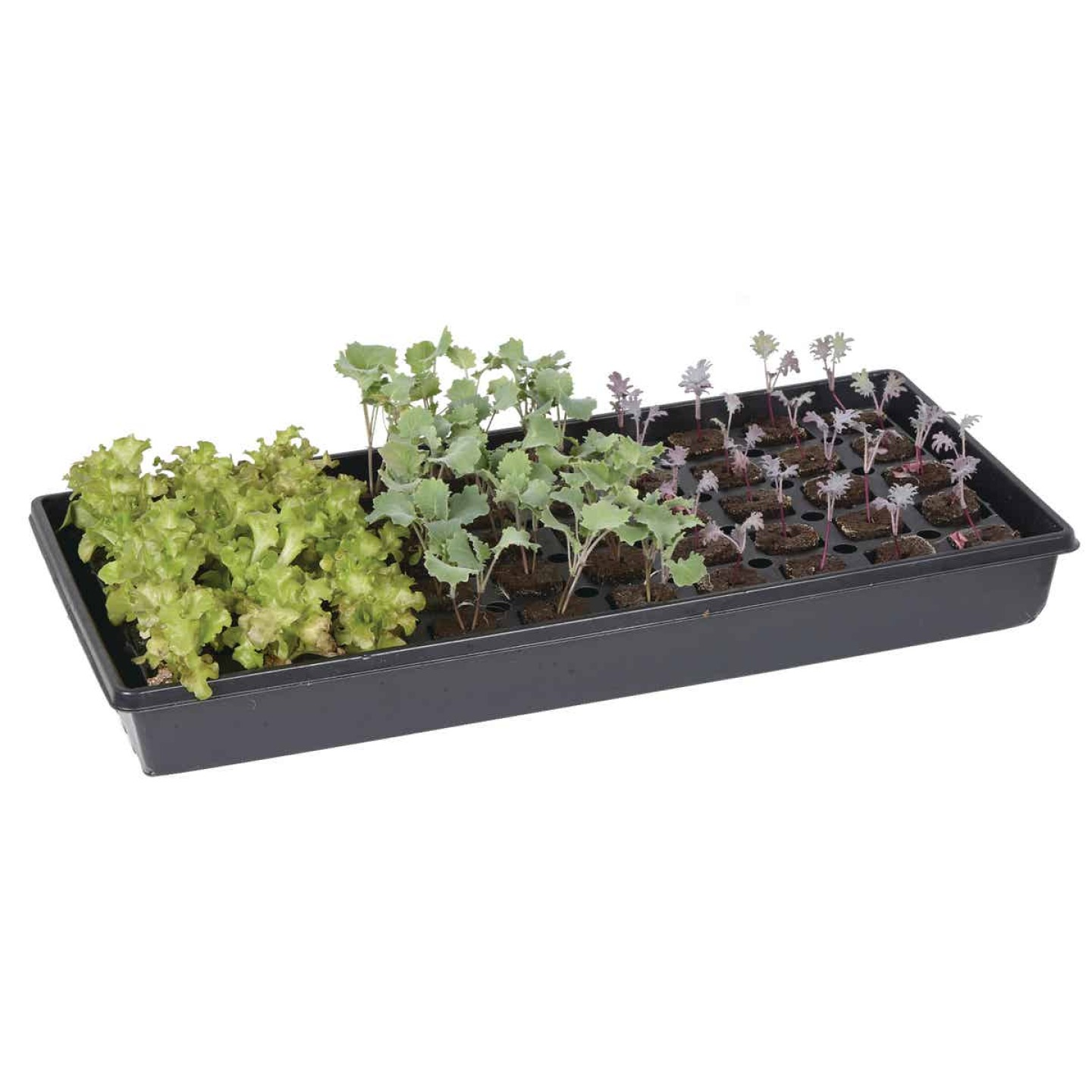 Root Farm 50-Cell Hydroponic Starter Kit Image 2